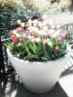 Colorful flowers taken by AntonioWestley